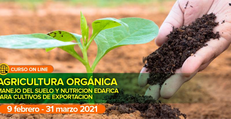 Curso online en Agricultura orgánica: Manejo del suelo y nutrición edáfica para cultivos de exportación